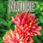 fotofino-categories-nature