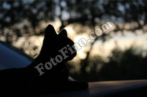Cat Silhouette - FotoFino.com