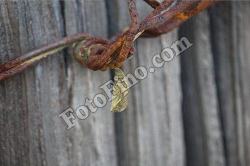 Chrysalis - FotoFino.com