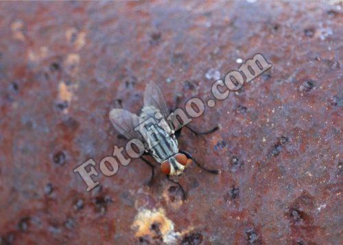 Fly02 - FotoFino.com