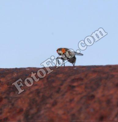 Funny Fly - FotoFino.com