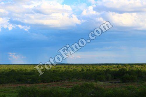 Green Landscape - FotoFino.com