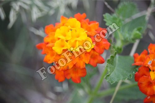 Orange and Yellow Flower - FotoFino.com