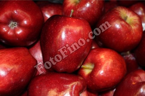 Red Apples - FotoFino.com