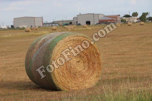 Round Hay Bale - FotoFino.com