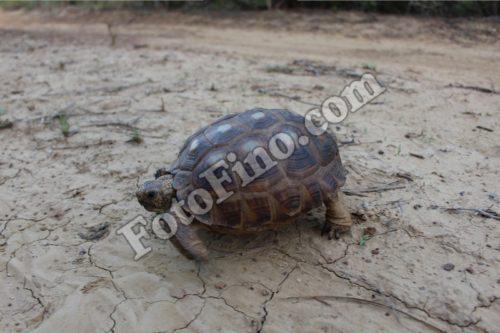 Turtle - FotoFino.com
