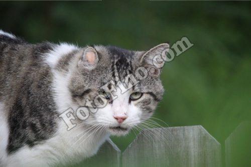 White And Grey Cat - FotoFino.com