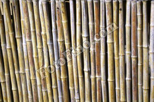 Bamboo - FotoFino.com