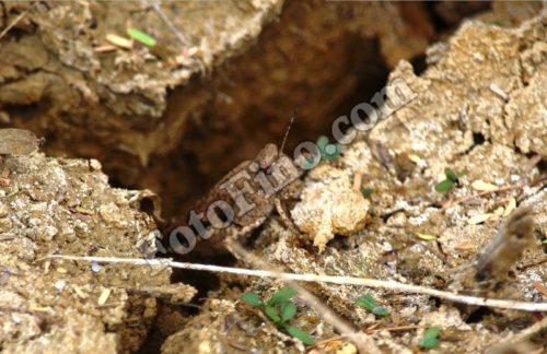 Camouflaged Grasshopper - FotoFino.com