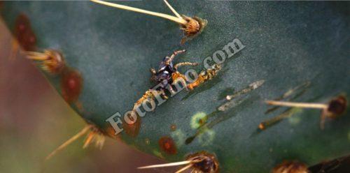 Ugly Spider - FotoFino.com