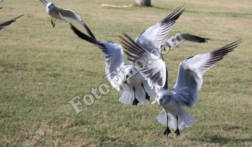 Seagulls - FotoFino.com