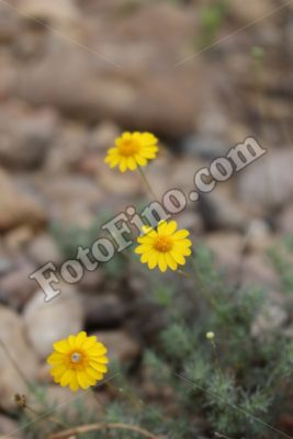 Little Yellow Flowers - FotoFino.com