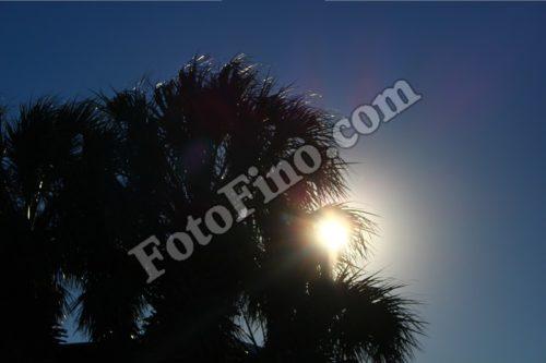 Palm Tree Silhouette - FotoFino.com