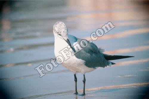 Seagull - FotoFino.com