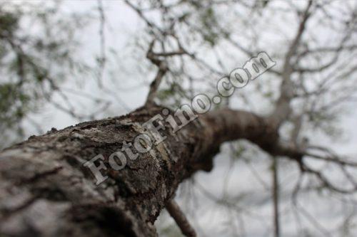 Tree Trunk - FotoFino.com