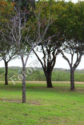 Trees - FotoFino.com