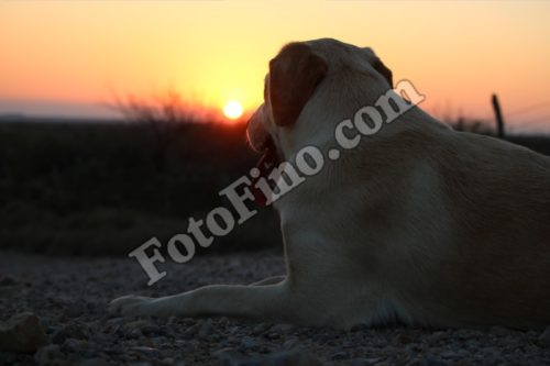 Dog Enjoying Sunset - FotoFino.com