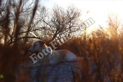 Dog Resting - FotoFino.com
