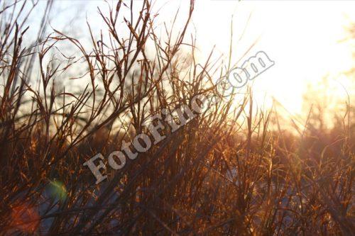 Dry Grass (2) - FotoFino.com