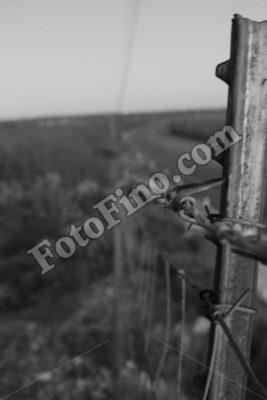 Fence - FotoFino.com