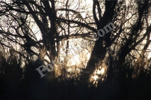 Sunlight Shining Through Trees - FotoFino.com