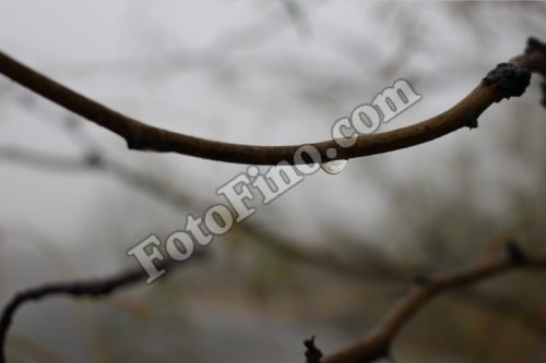 Water Drop On Branch - FotoFino.com