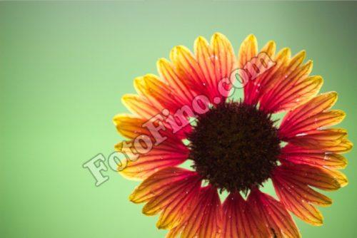 Orange and Yellow Flower - FotoFino.com