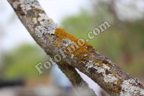 Tree Moss - FotoFino.com