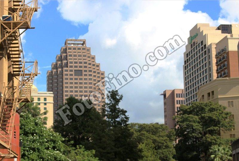 City Trees - FotoFino.com