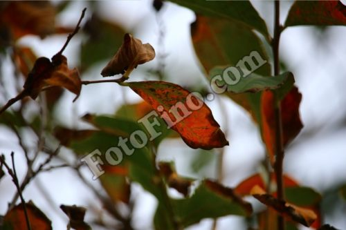 Fall Leaves - FotoFino.com