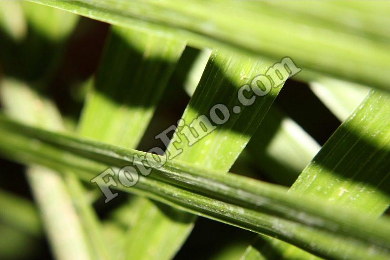 Green Leaves - FotoFino.com