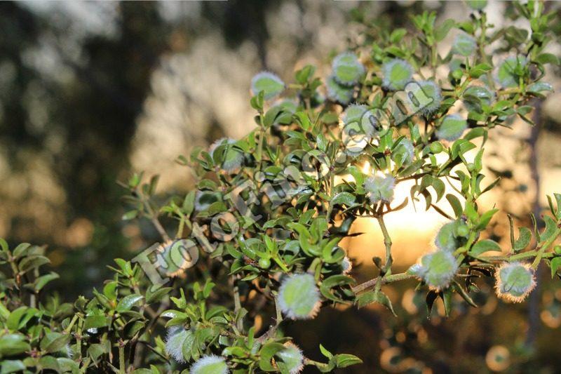 Small Tree Branch - FotoFino.com