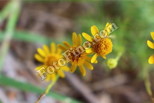 Small Yellow Flowers - FotoFino.com
